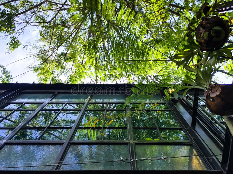 Take a break on yours routine daily. The Reflecting of Greenery tree on window aluminium frames.When you`re tired, Look up to the sky gets some fresh from stock images
