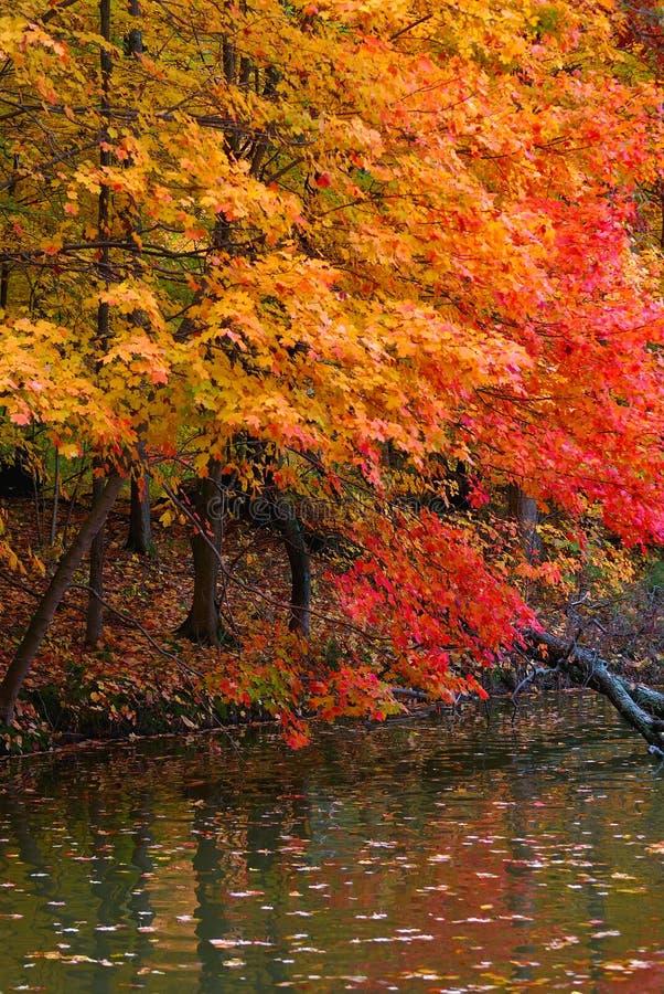Reflecting Pond Royalty Free Stock Image