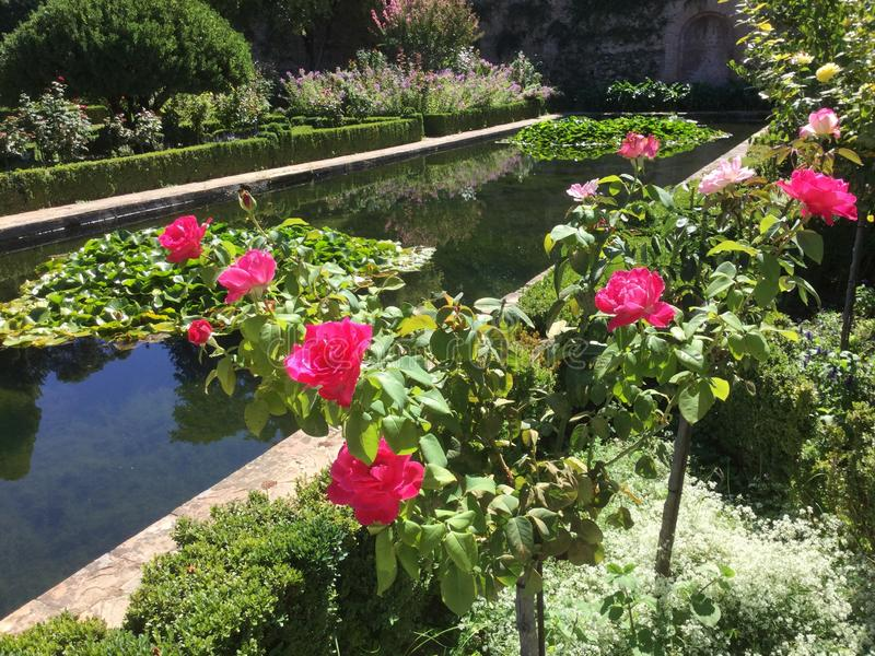 Reflecting Pool and Roses at the Alhambra in Granada Spain royalty free stock images