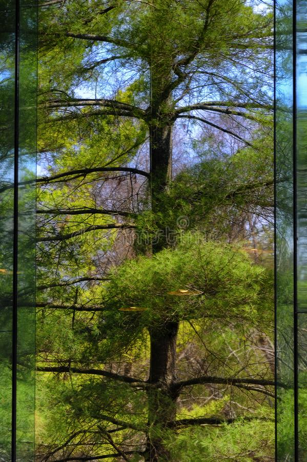 Reflecting trees in a large tall window royalty free stock photos