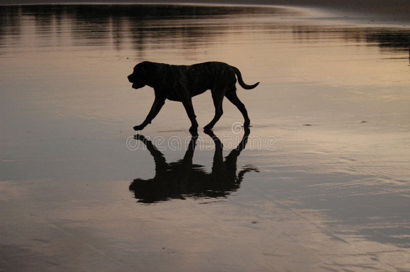 Download Reflection stock photo. Image of body, pooch, water, walking - 171304