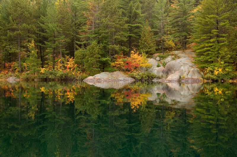 Download Reflection stock image. Image of leaves, forest, green - 3461455