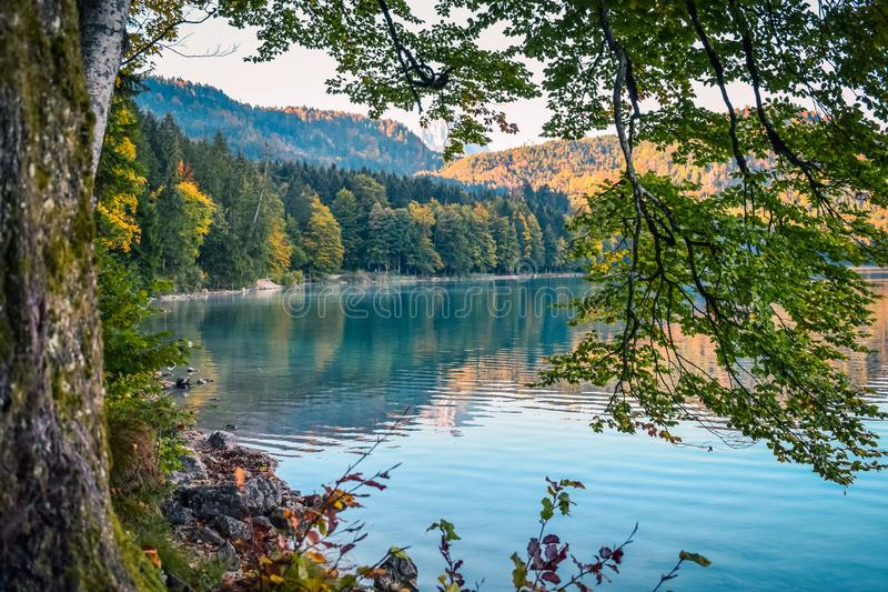 Reflection of autumn forest on the surface of the water in a lake in the mountains in the Alps from the shore royalty free stock photo