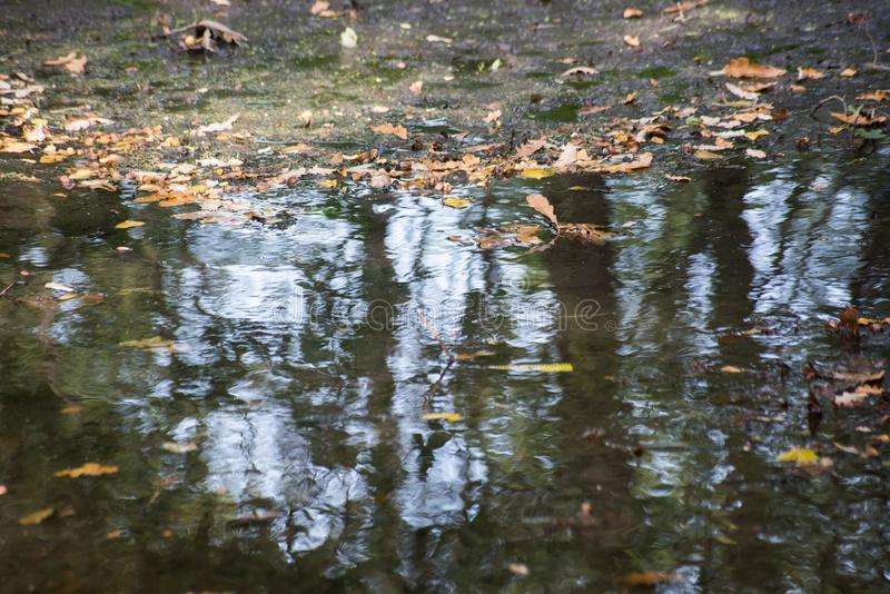 Reflection in the autumn puddle with fallen leaves. Is close royalty free stock photos
