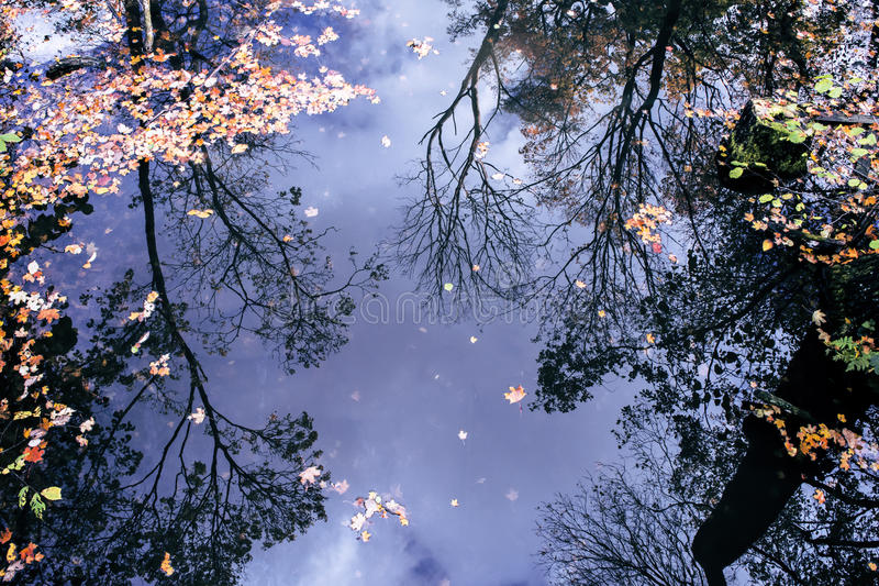 Reflection of autumn trees in water. Reflections of bare branches and leaves, autumn trees, in a wide creek/pond royalty free stock photography