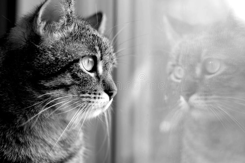 Reflection of a cat royalty free stock photos