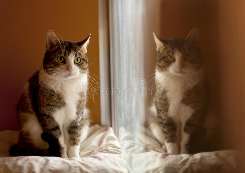 Reflection of a cat royalty free stock images