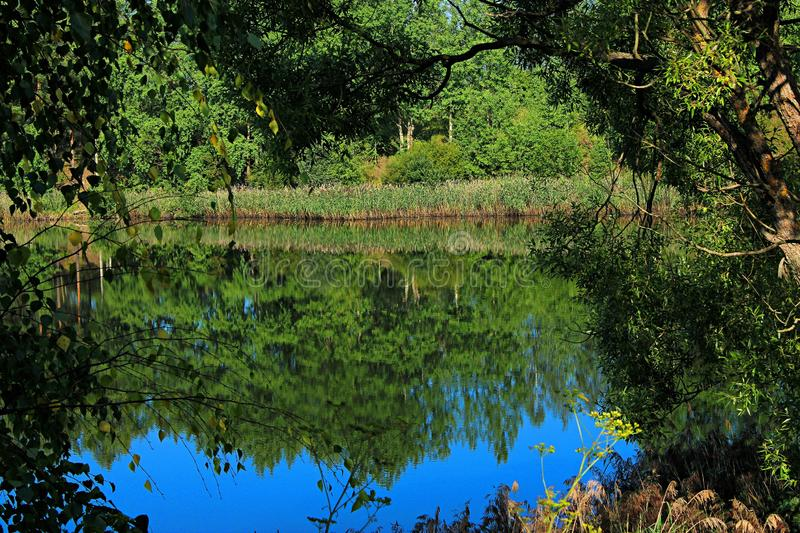 Reflection of coastal vegetation in the calm surface of the water on the lake royalty free stock photos