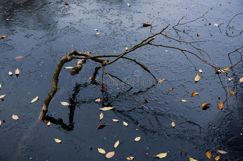 Reflection of a curved stick in the blue ice surface. Yellow leaves lie on frozen space royalty free stock images