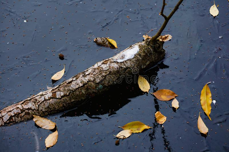 Reflection of a curved stick in the blue ice surface. Yellow leaves lie on frozen space stock photography