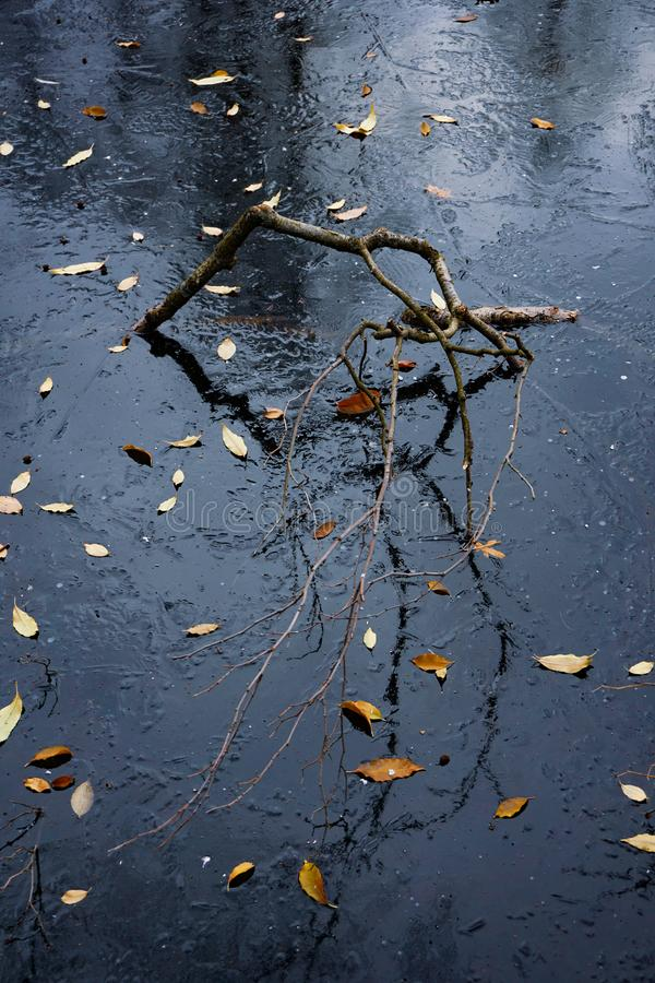 Reflection of a curved stick in the blue ice surface. Yellow leaves lie on frozen space stock photo