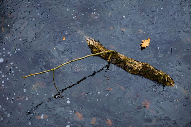 Reflection of a curved stick in the blue ice surface. Yellow leaves lie on frozen space royalty free stock photo