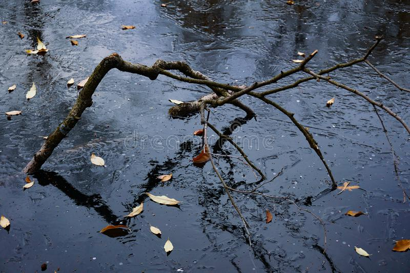 Reflection of a curved stick in the blue ice surface. Yellow leaves lie on frozen space stock photos