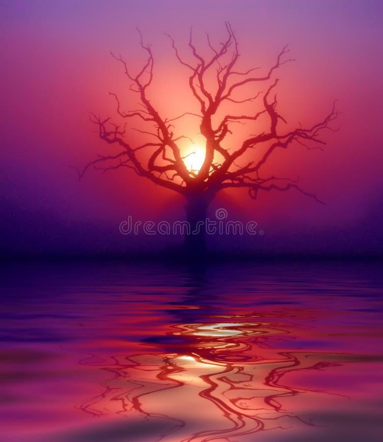 Reflection of dawn vector illustration