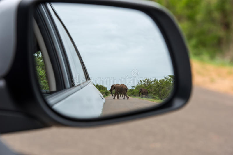 Reflection Of Elephant In Rear View Mirror stock image