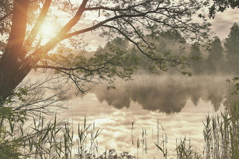 Reflection of the first rays of dawn sunlight in the lake stock photography