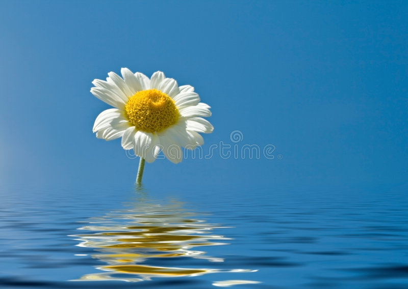 Reflection of a flower stock image