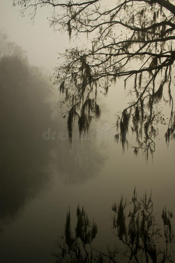 Reflection in fog. Moss in trees over hanging river in fog with reflection royalty free stock images