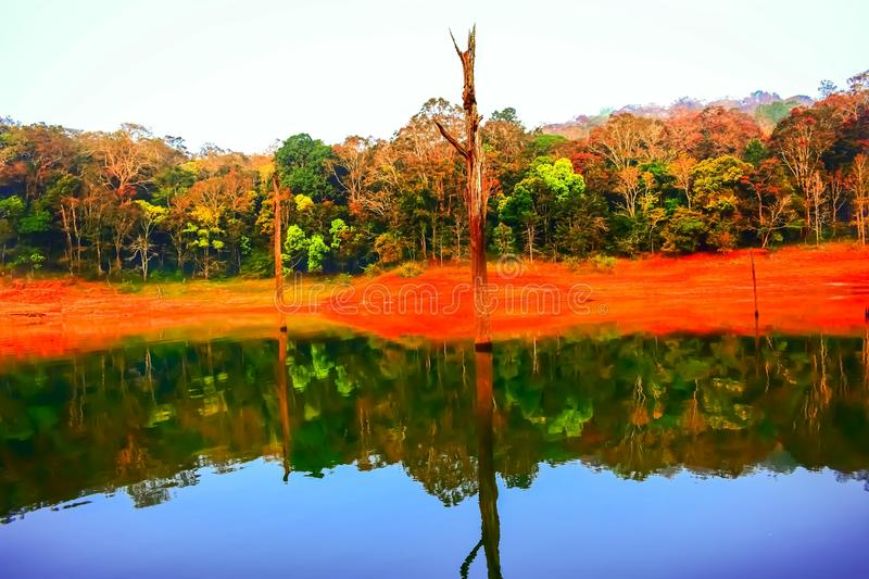 Reflection of forest trees in the water stock photo