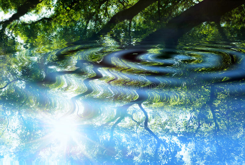 Reflection of forest on water stock images