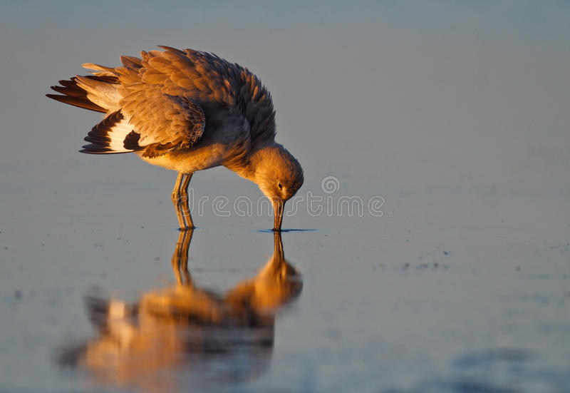 Reflection on a golden morning royalty free stock photography