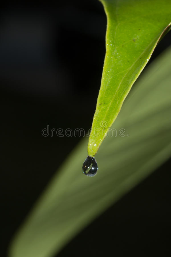 Reflection of green leaf in water drop stock image
