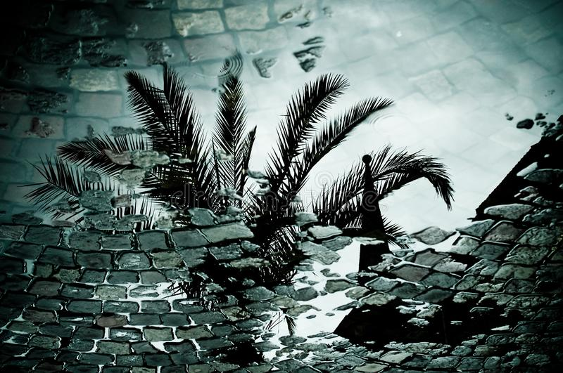 Reflection of a palm tree in a puddle royalty free stock images