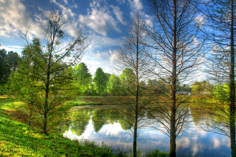 Reflection of a Pond stock images