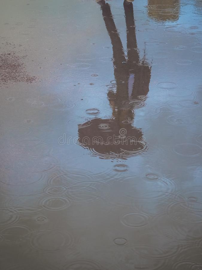 Reflection in a puddle silhouette of a woman with an umbrella royalty free stock photography