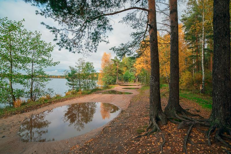 The reflection in the puddle. Autumn landscape . royalty free stock image
