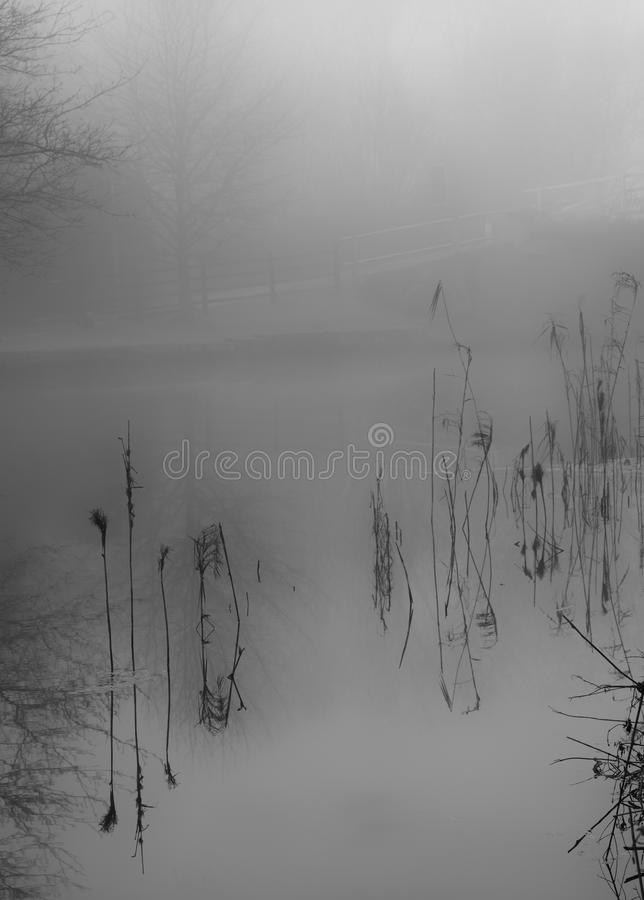 Reflection of reeds, River Wey, Surrey. Black and white. royalty free stock photo