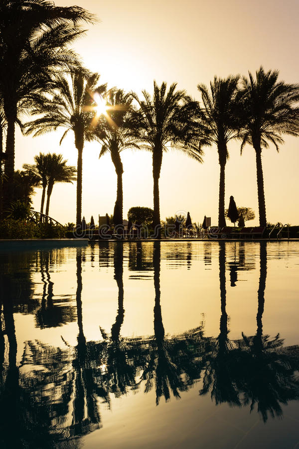 Reflection of silhouettes of palm trees in the pool water
