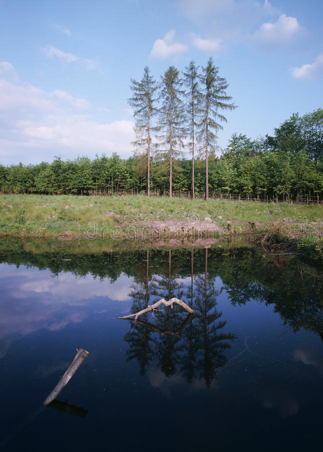 Download Reflection On The Surface Of The Spring Forest Stock Photo - Image: 18164994