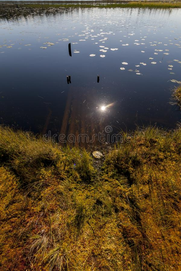 Reflection in the swamp near pine forest at noon, Karelia, Russia stock image