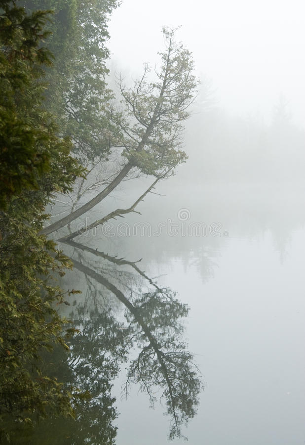 Reflection Of A Tree On A Lake Stock Photo