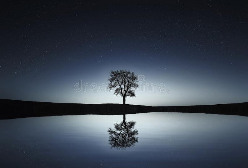Reflection of tree on landscape stock image