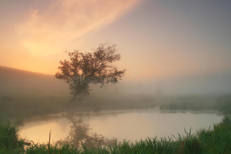 Reflection of a tree in a misty morning royalty free stock photos