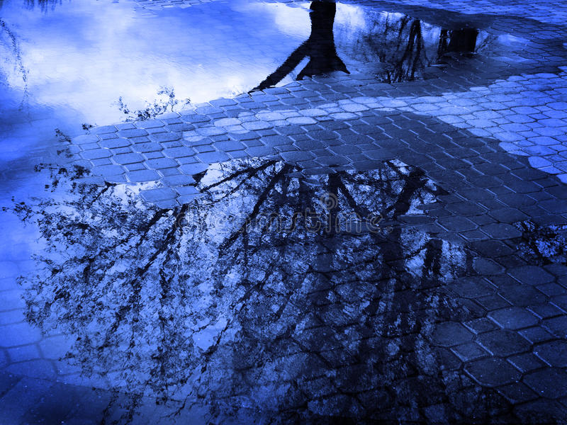 Reflection of Tree in Puddle of Water After Sorm stock photography