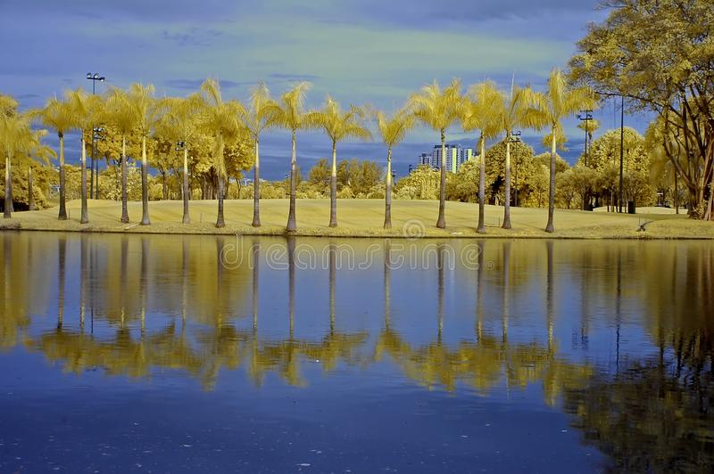 Reflection of tree and sky in the lake royalty free stock photography
