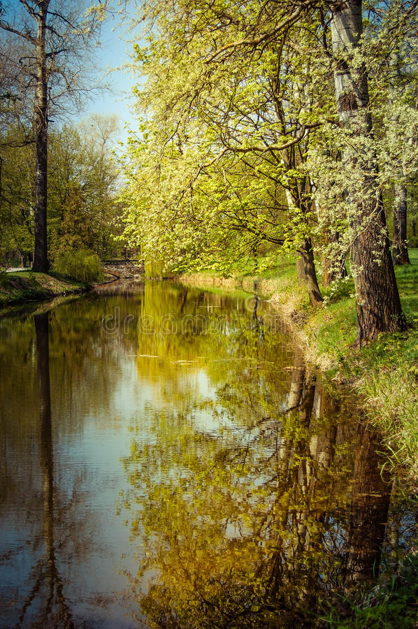Reflection of tree trunks in water in the spring. Reflection of straight tree trunks and blue sky in water in the spring royalty free stock photos