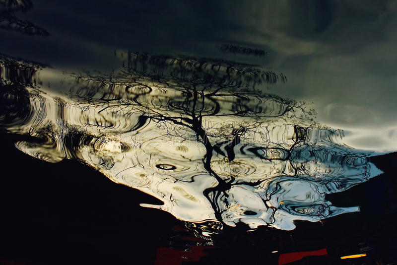 Reflection - the tree in water. InIndia stock image