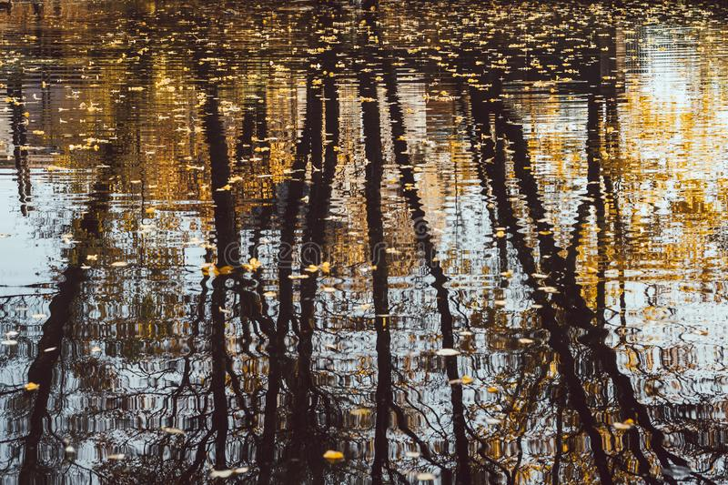 Reflection of trees in the autumn pond close-up. Yellowed leaves fall on the water surface stock image