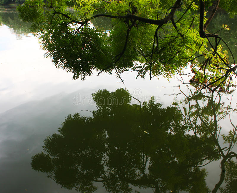 Reflection of trees in calm lake stock image