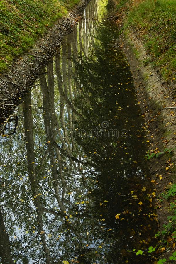 Reflection of trees and foliage in the water of a natural forest ravine royalty free stock image