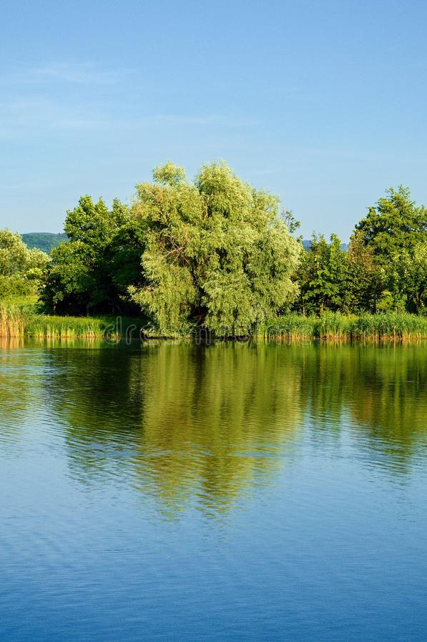 Reflection of trees in the lake royalty free stock image
