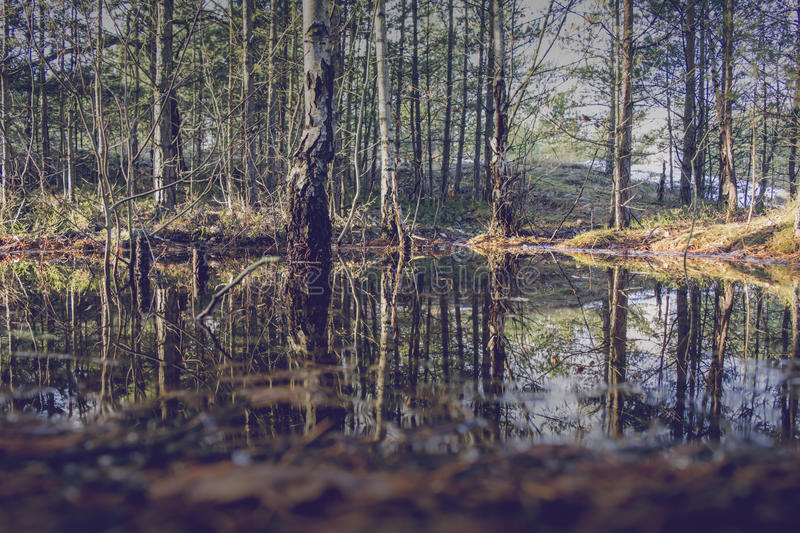 Reflection of trees in a marsh. Reflection of trees in the water of a swamp stock images