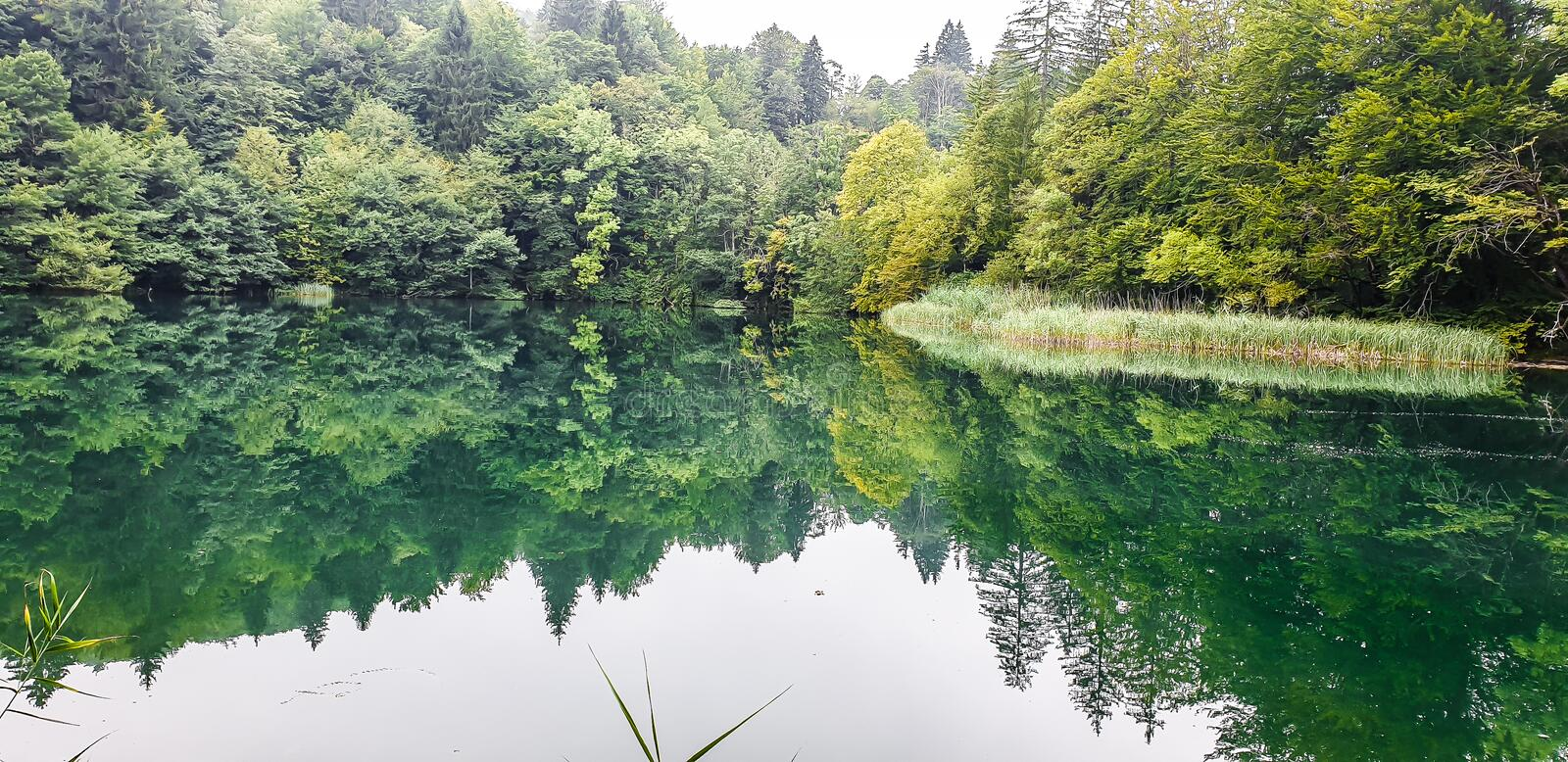 Reflection of trees and plants on the water. Go to the nature. stock photo