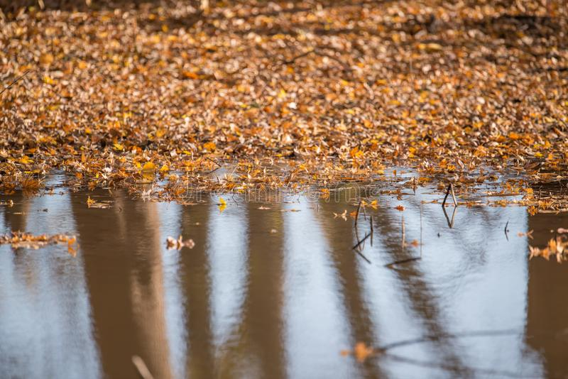 Reflection of trees and sky in puddle with a layer of brown / orange fall leaves in the background - in floodplain of the Minnesot stock images