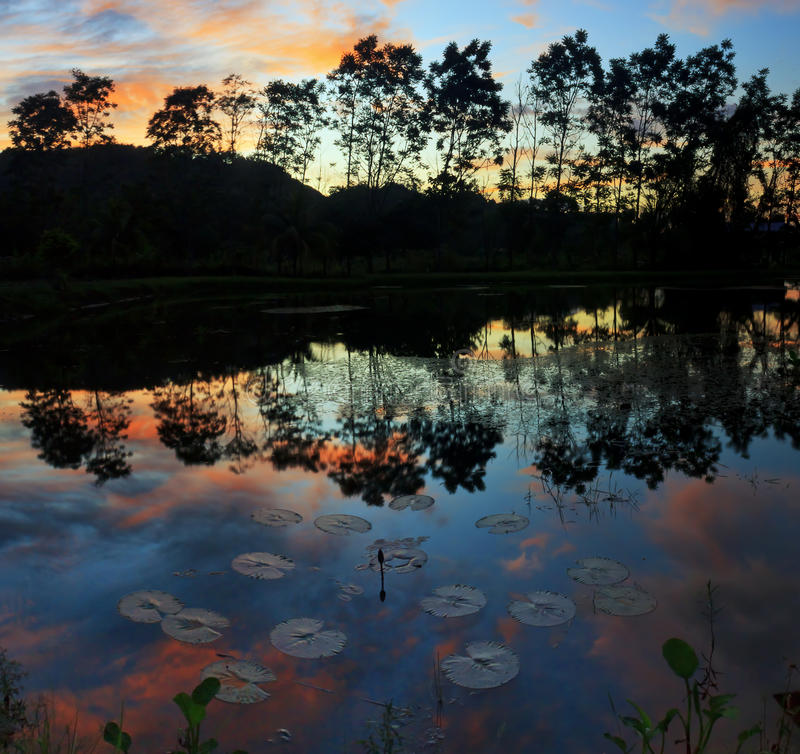 Reflection of trees and sunset stock photos