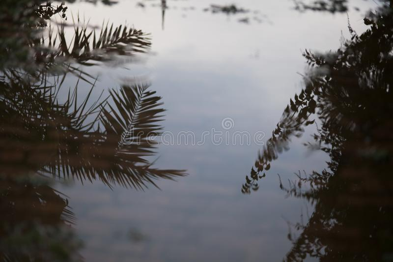 Reflection of trees in  water. Nature, refraction, leaf, eaves, leaves stock photo